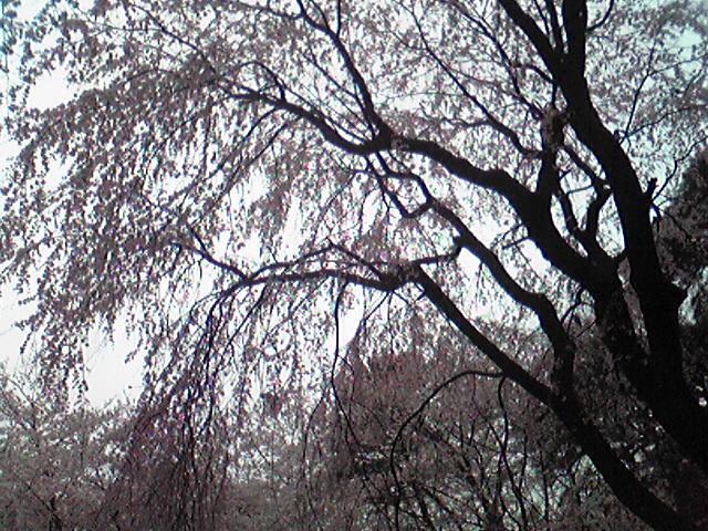 Image292
